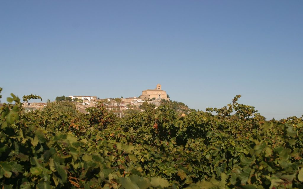 magallon-desde-la-vineyard